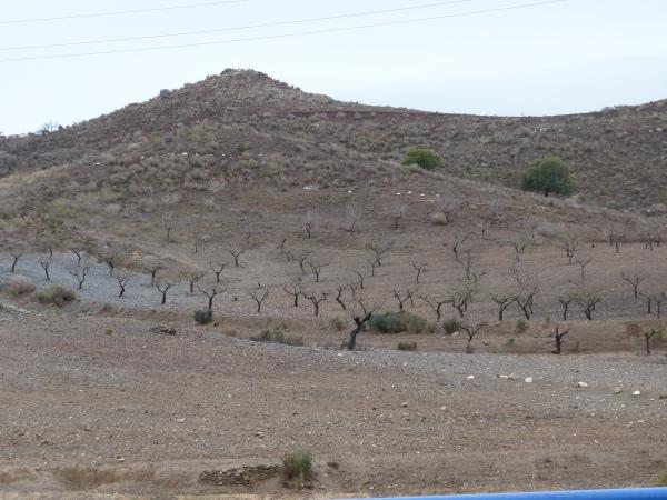 Vista del estado del monte consecuencia de la extrema sequía que se sufre en la zona de Tallante