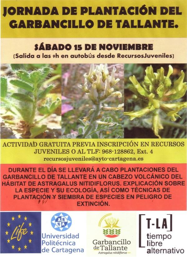 PLANTACIÓN GARBANCILLO DE TALLANTE