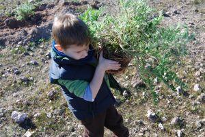 Los más pequeños contribuyen llevando las plantas de garbancillo por el Cabezo de Los Sánchez
