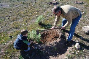 Detalle de preparación del hoyo para plantar un individuo de garbancillo