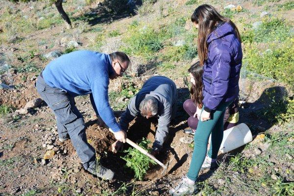 16_Las plantas usadas en la gración se acondicionarón perfectamente para que sobrevivan y contribuyan a la recuperación del garbancillo con motivo del proyecto LIFE
