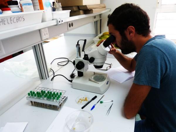 Análisis de semillas para conocer su viabilidad o ataque de plagas
