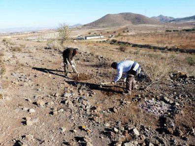 Plantación y siembra de garbancillo de Tallante