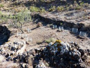 Plantaciones de garbancillo de Tallante en hábitat natural